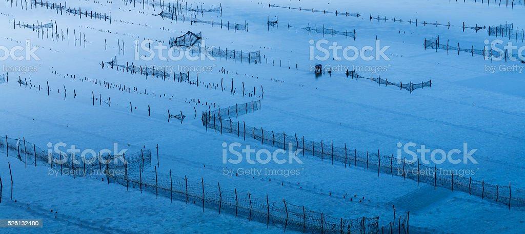 Seaweed farming on the shoreline in Bali stock photo