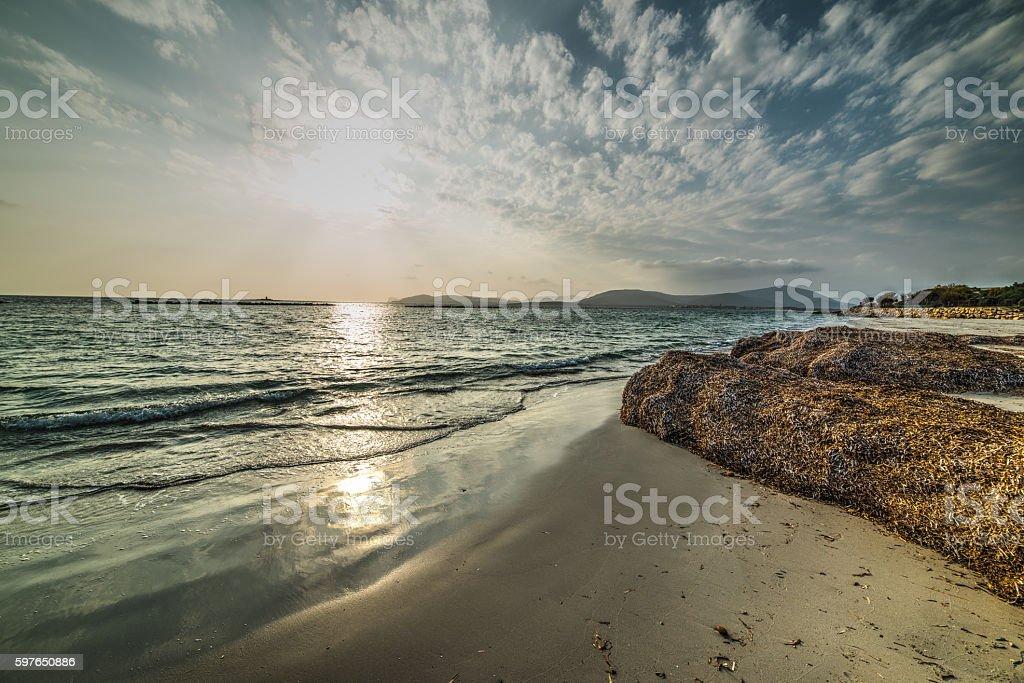 seaweed in Alghero shore at sunset stock photo