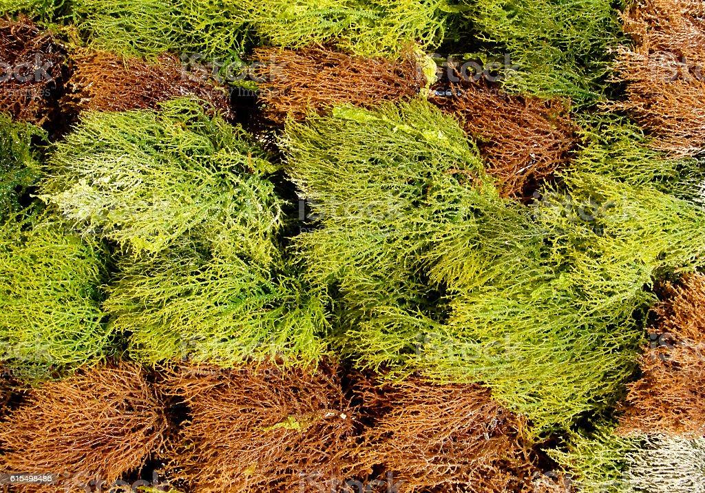 Seaweed is drying,Kiwengwa beack,Zanzibar,Tanzania stock photo