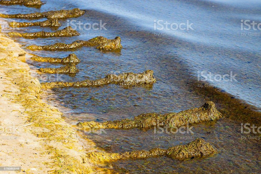 Seaweed on the beach stock photo