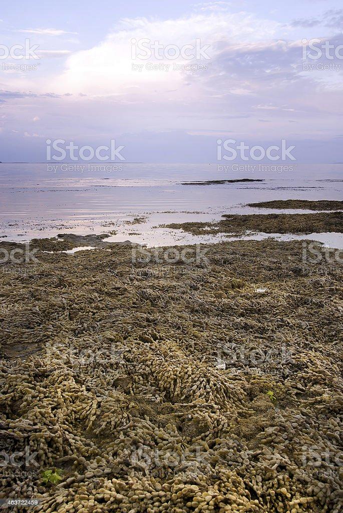 Seaweed Over Rocks stock photo