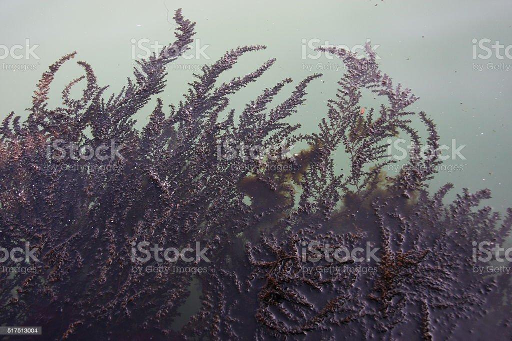 seaweed stock photo