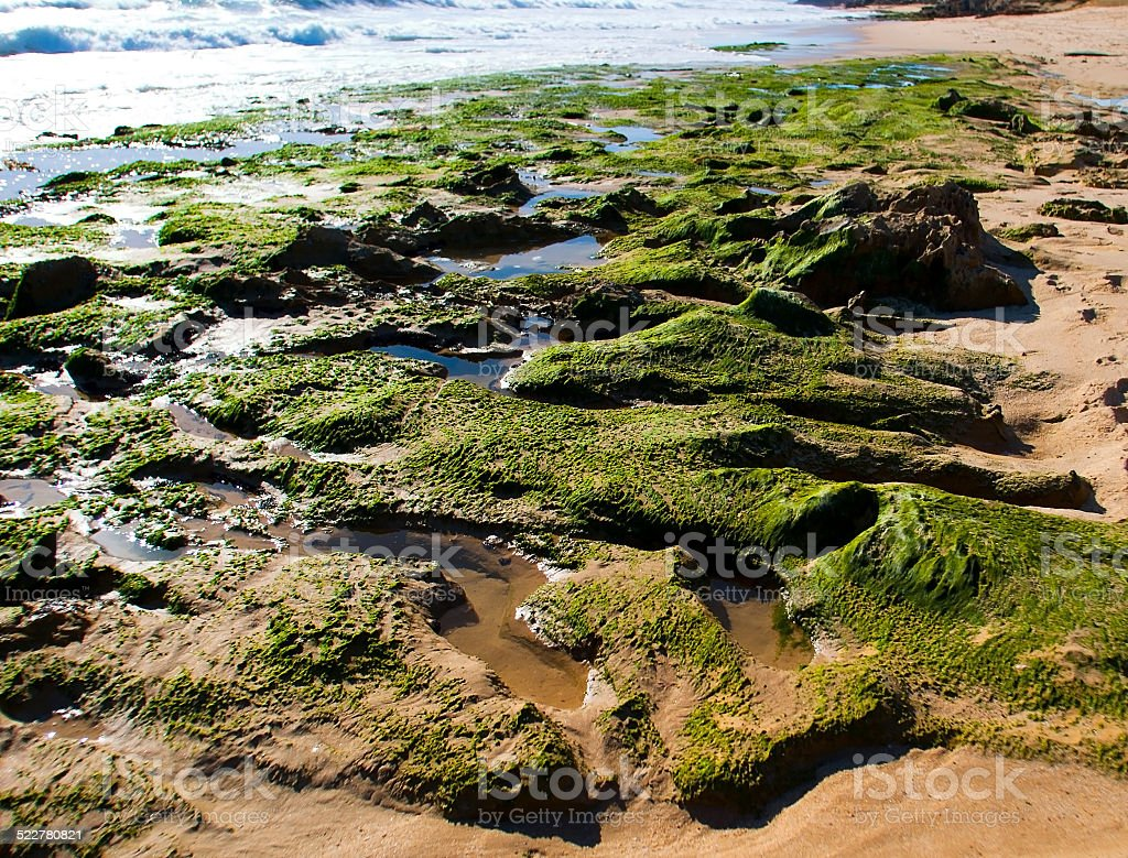 seaweed rocks, Rye Back Beach, Mornington Peninsula, Victoria, Australia royalty-free stock photo