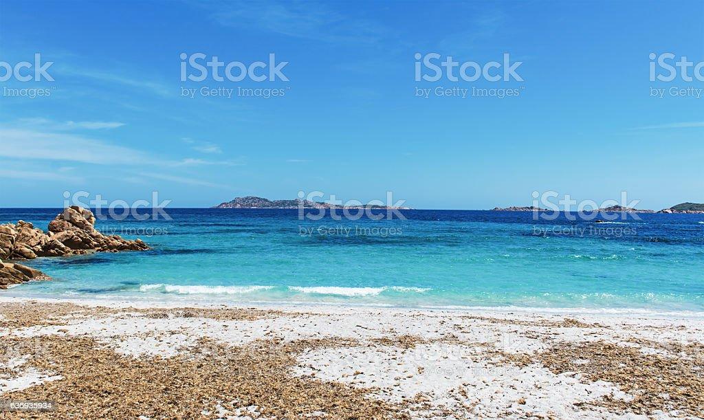 seaweeds in Capriccioli stock photo