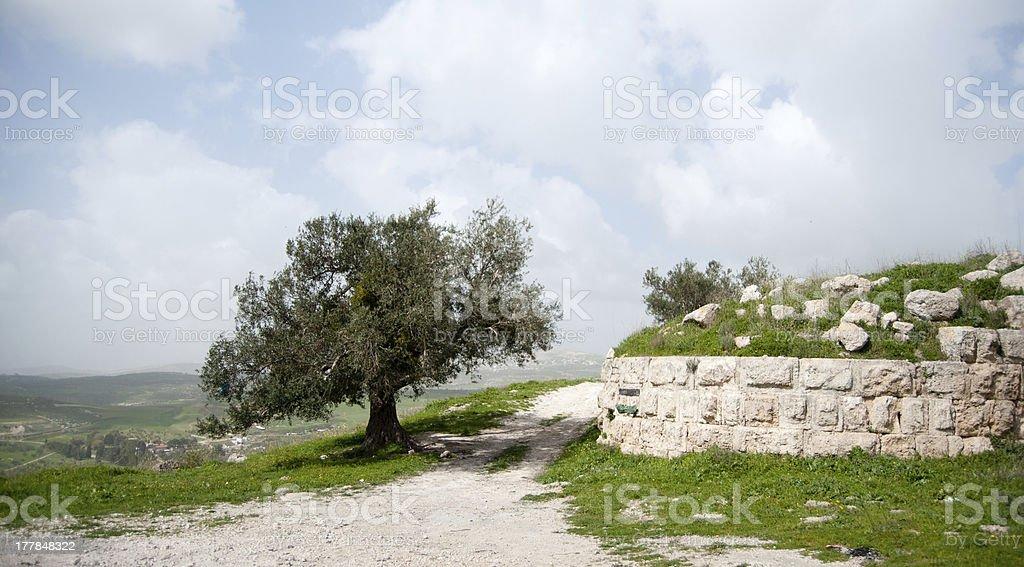 Sebastia archeology ancient ruins royalty-free stock photo