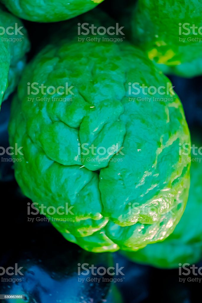 Sechium edule, Cucurbitaceae stock photo