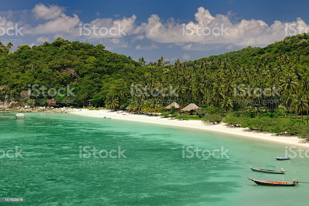 Secluded Paradise Tropical Beach with many Palm Trees (XXXL) stock photo
