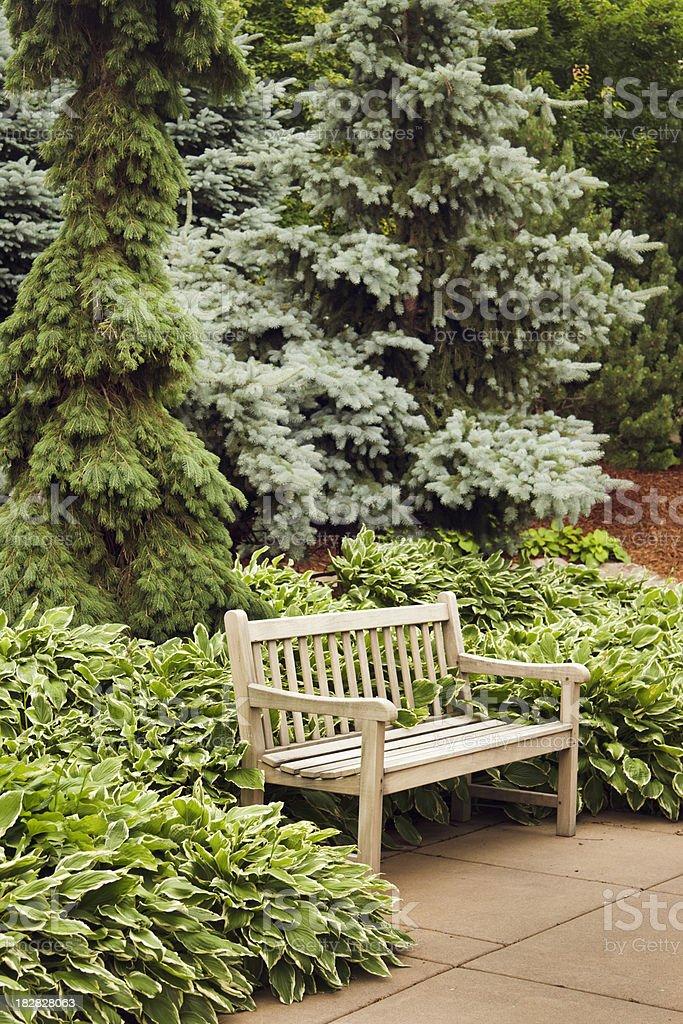 Secluded Teak Wooden Garden Bench, Backyard Patio, Hostas, Evergreen Trees royalty-free stock photo