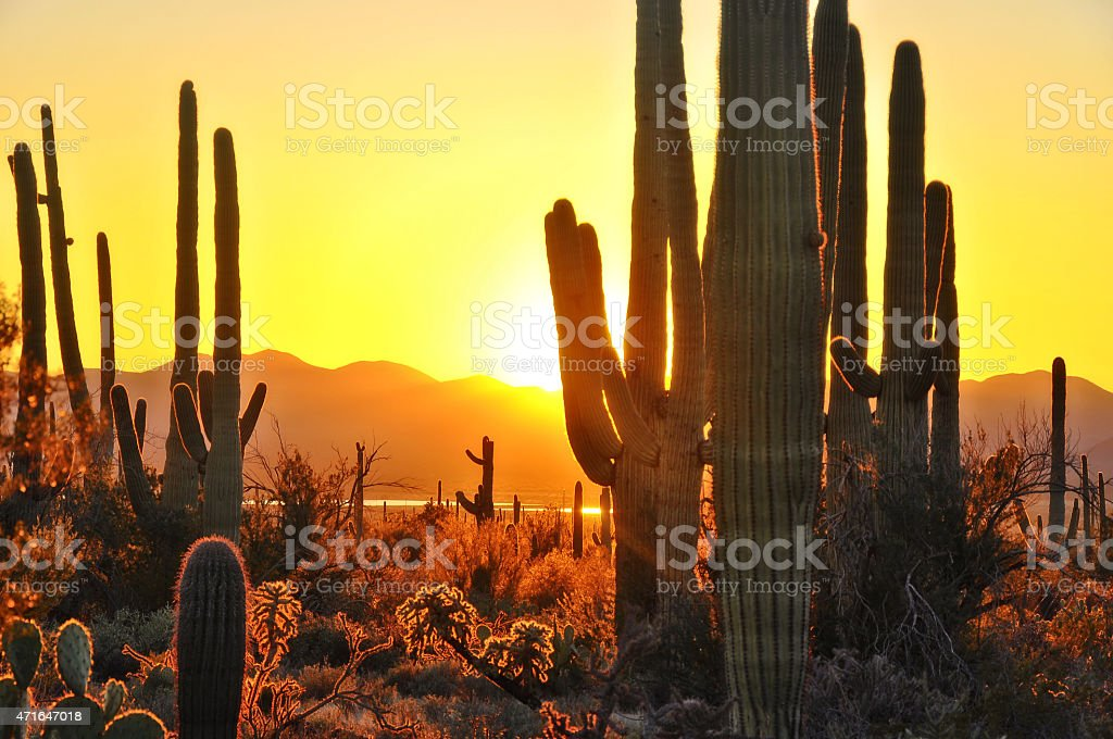 Second Sunset at Saguaro National Park near Tucson Arizona. stock photo