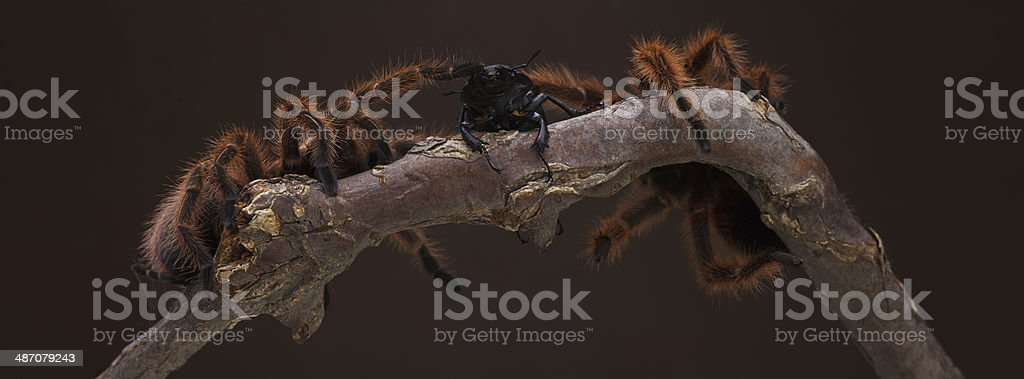 Second to Die. royalty-free stock photo