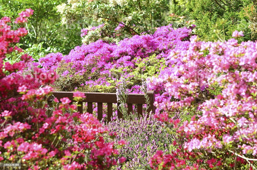 Secret bench hidden in pink flower garden stock photo