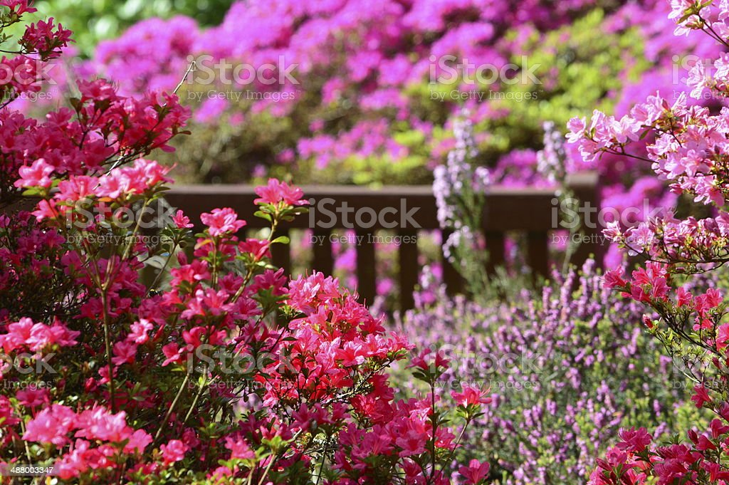 Secret bench hidden in pink garden stock photo