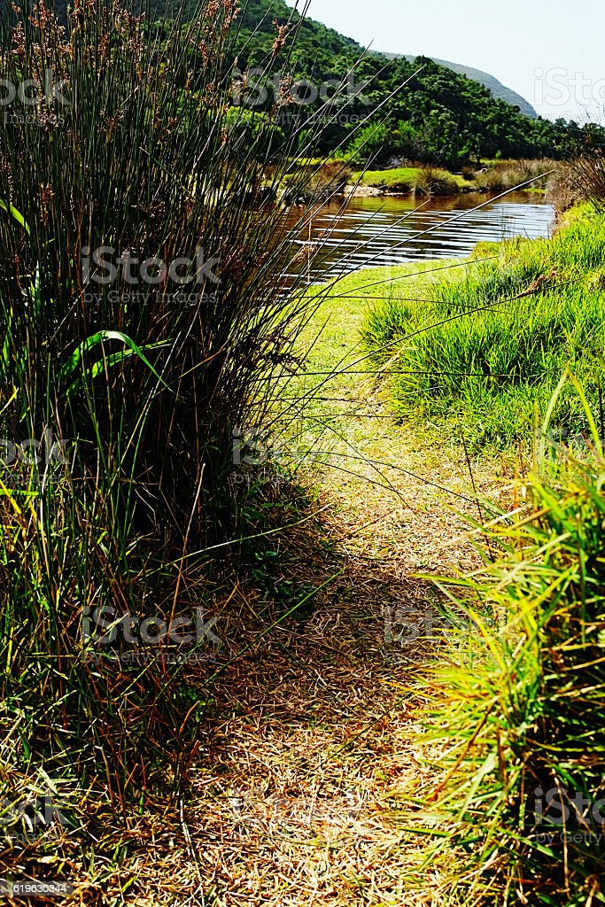 Secret grassy path to beautiful remote river stock photo