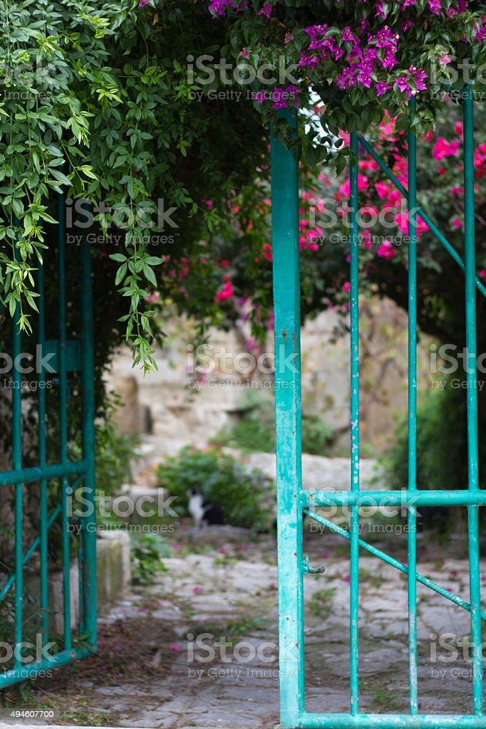Secret Mediterranean Garden: Turquoise Gate, Bougainvillea, Cobbles, Cat stock photo