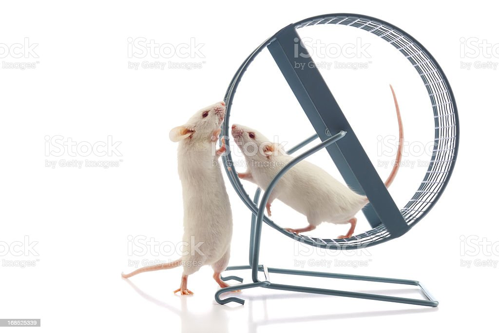Secret Meeting at the Mouse Wheel stock photo