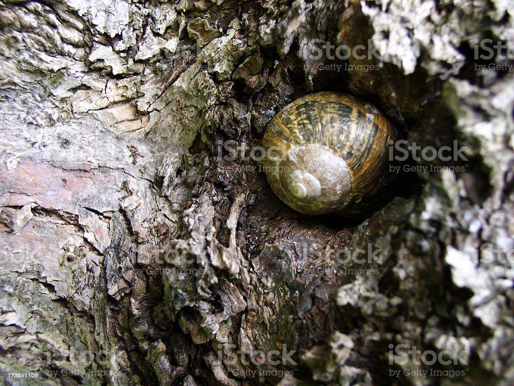 secret snail royalty-free stock photo