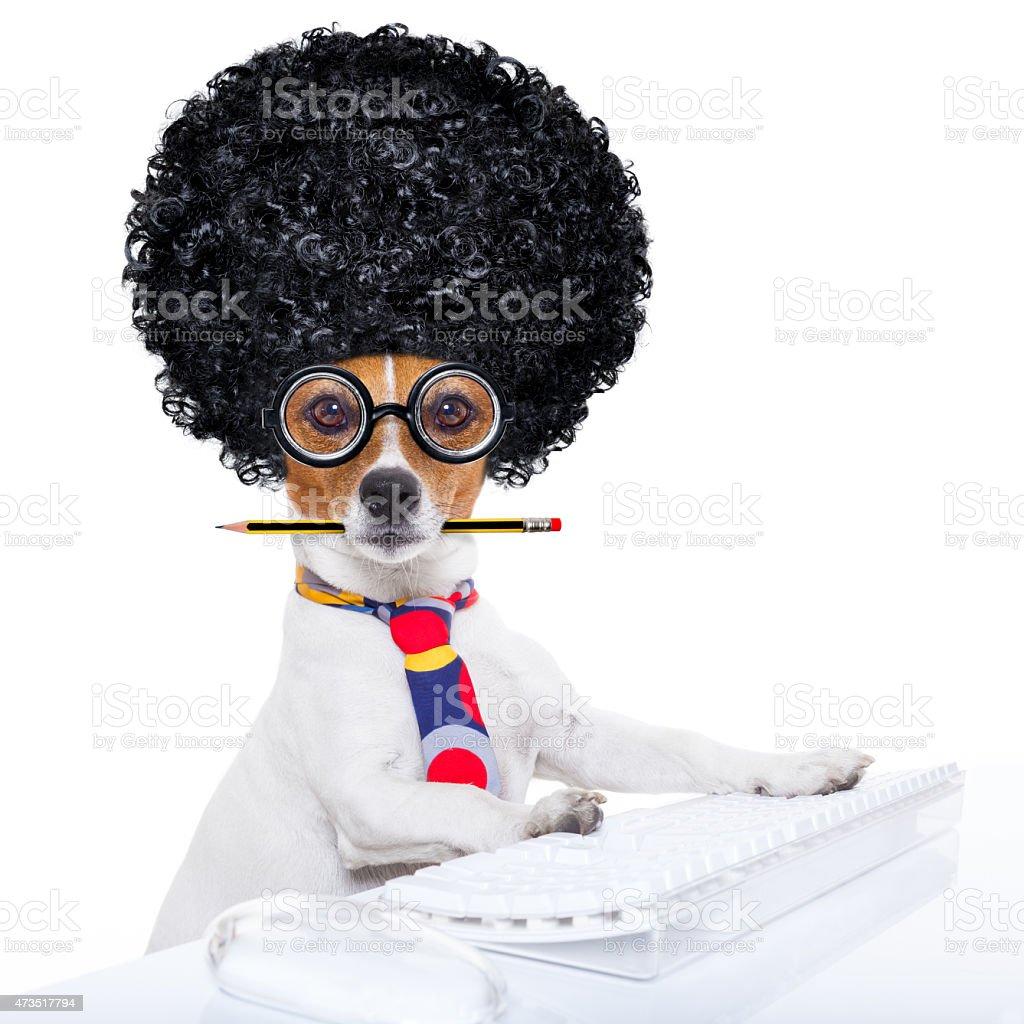 secretary dog stock photo