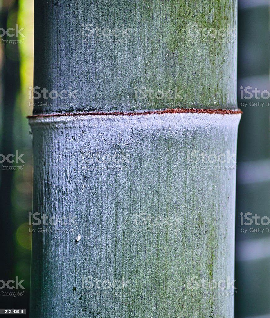 Section of bamboo stock photo