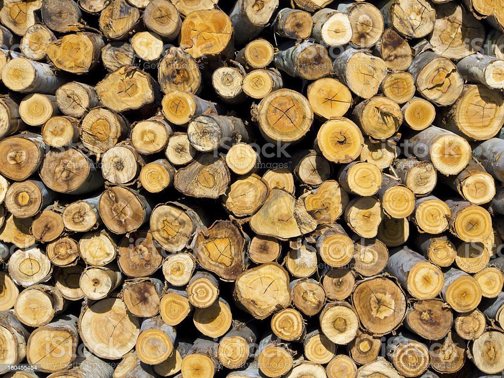 section of log woods royalty-free stock photo