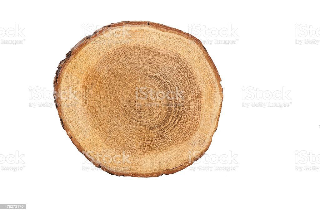 sectional view of tree vector art illustration