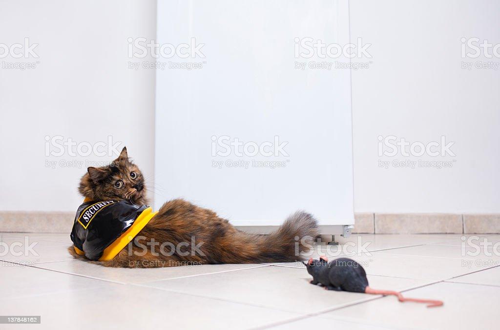 Security cat stock photo