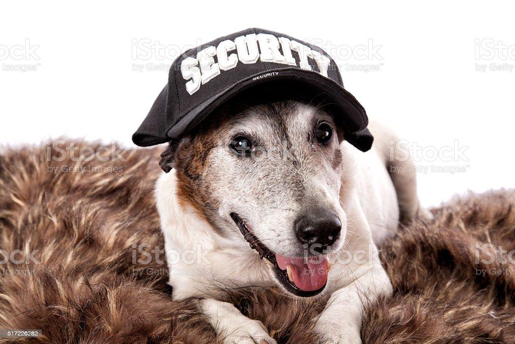 Security Dog stock photo