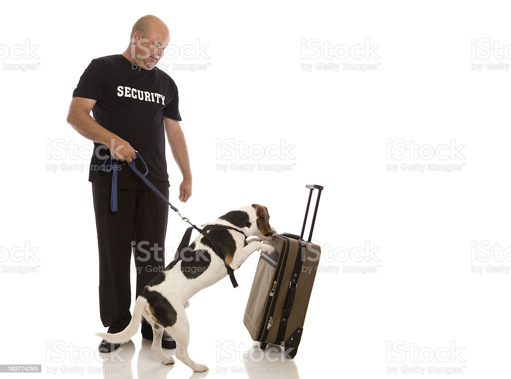 Security Sniffer Dog stock photo