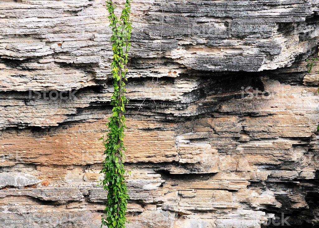 Sedimentary rock strata, rock-wall liana, Caverne Patate, Rodrigues island, Mauritius stock photo
