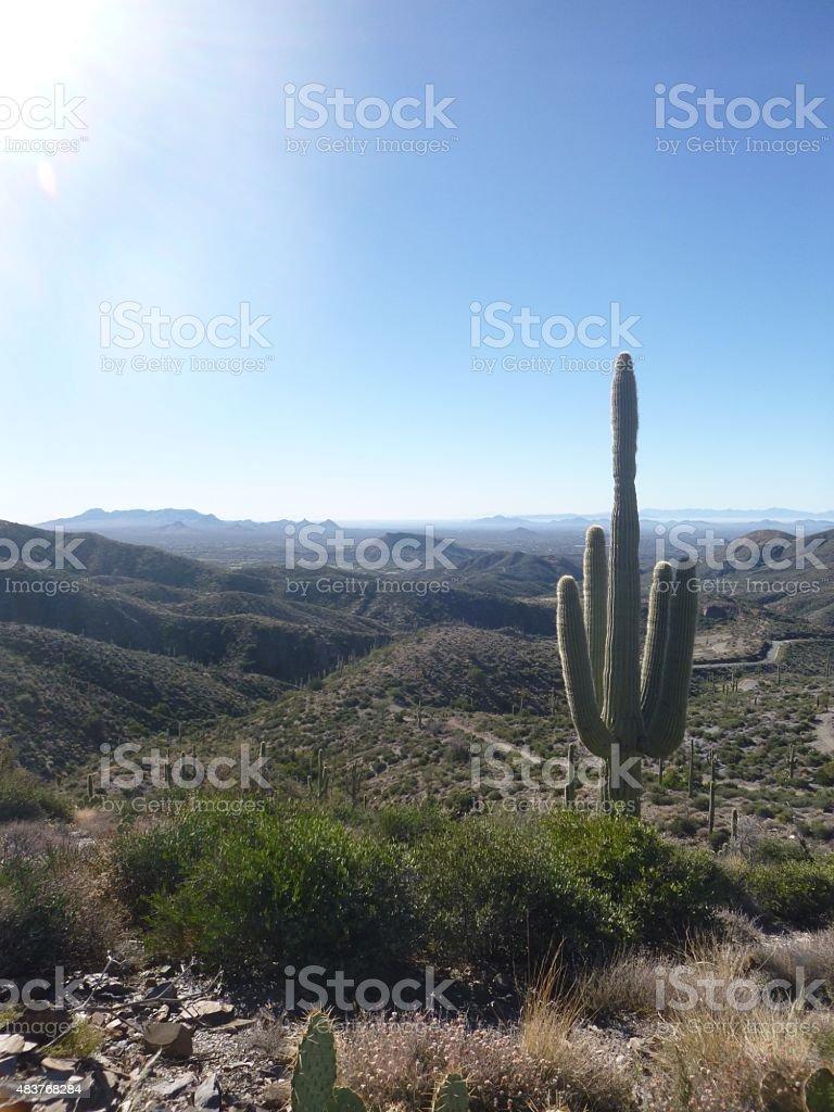 Sedona Cactus stock photo