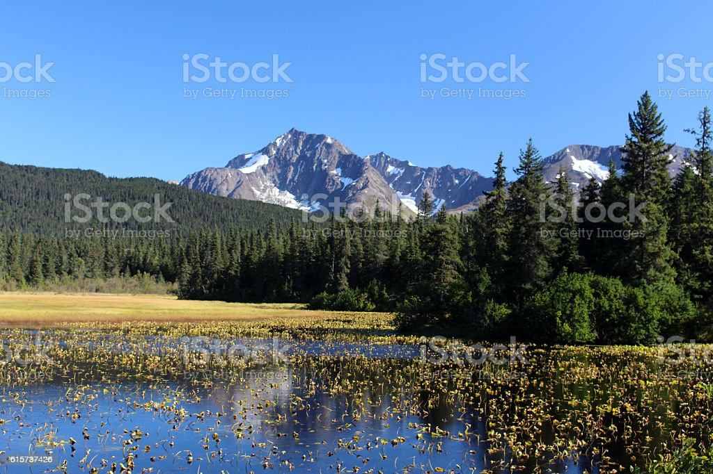 See in Alaska stock photo