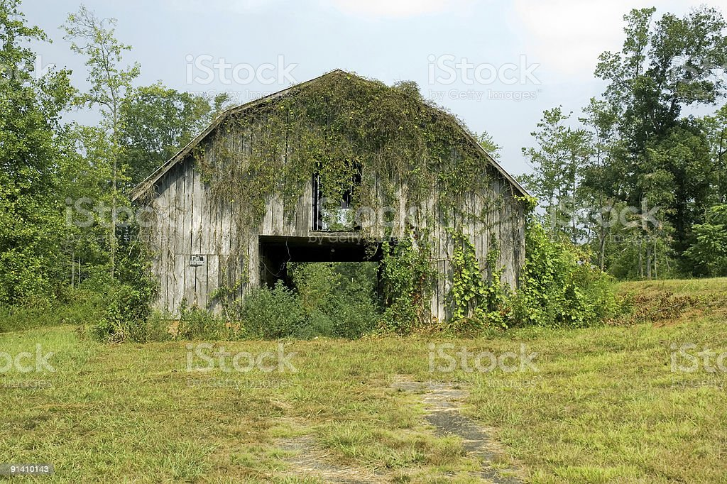 See Through Barn Covered in Ivy royalty-free stock photo