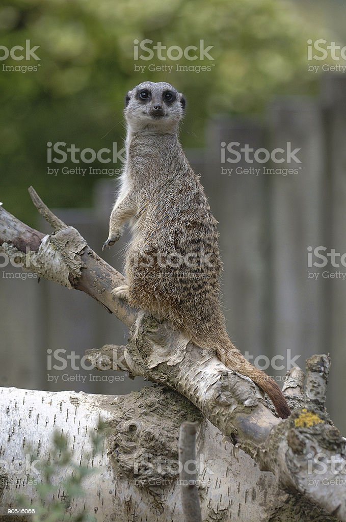 I see you! royalty-free stock photo