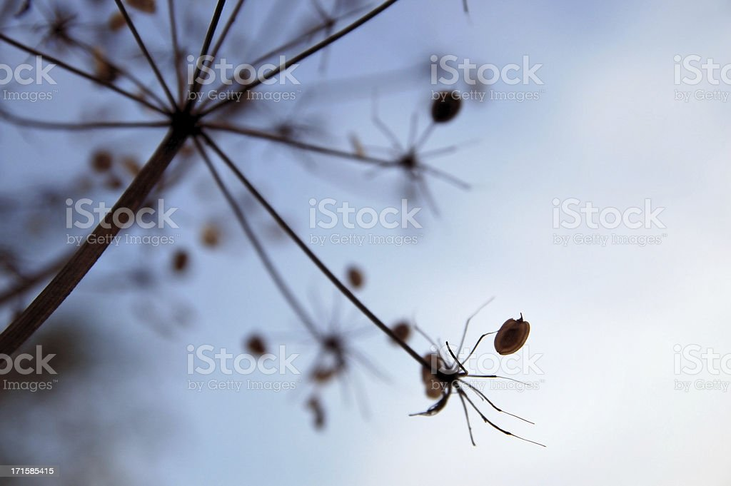 seed for the spring stock photo