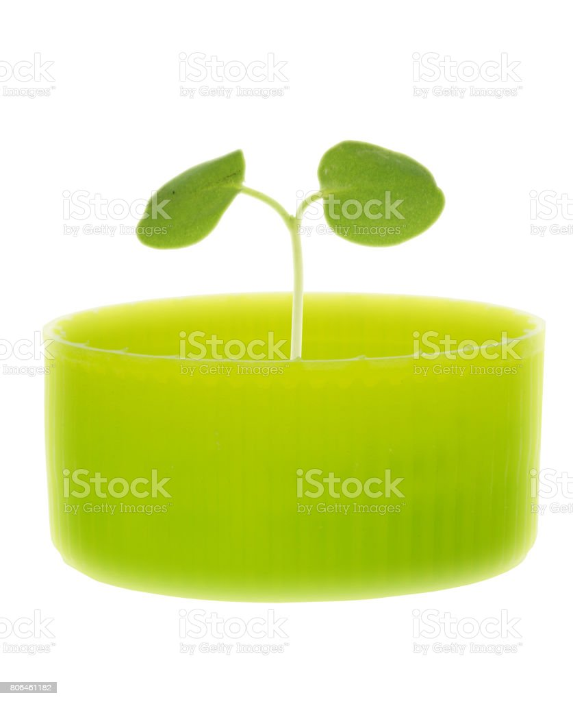 Seed leaf in bottle cap stock photo