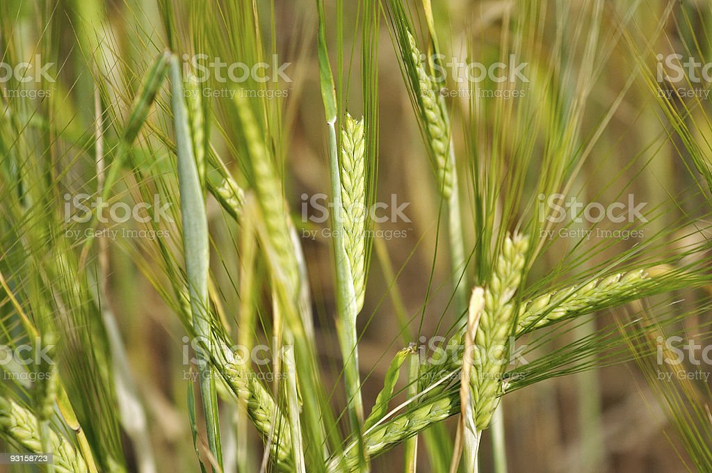 Seed stock photo
