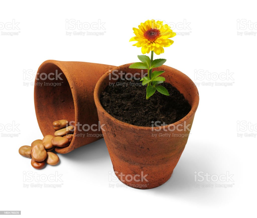 Seed Plants and Flowers stock photo