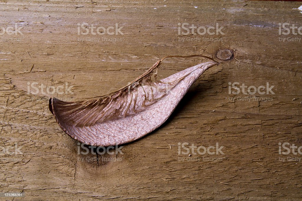 Seed pod on old wooden background stock photo