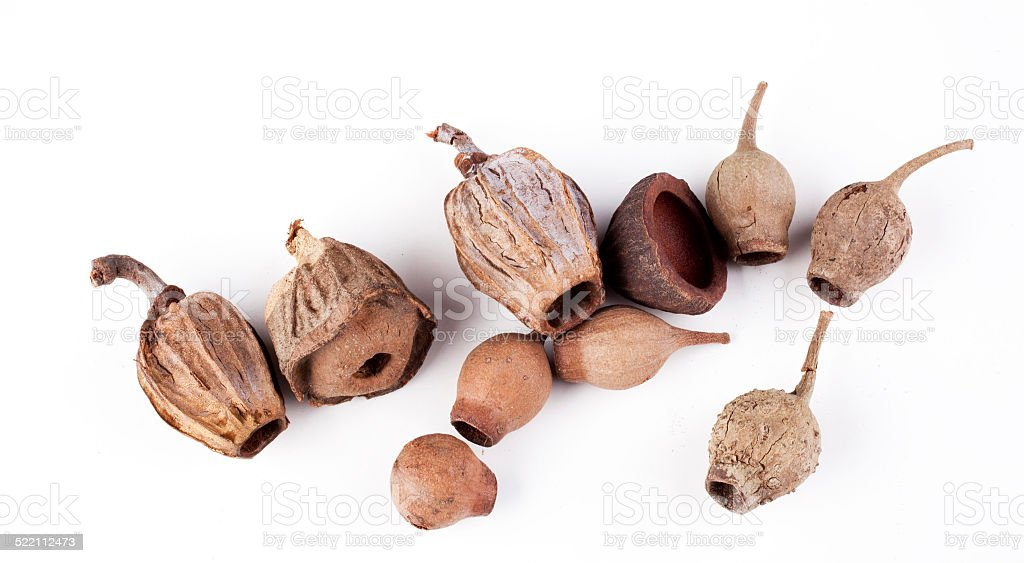 seed pods stock photo