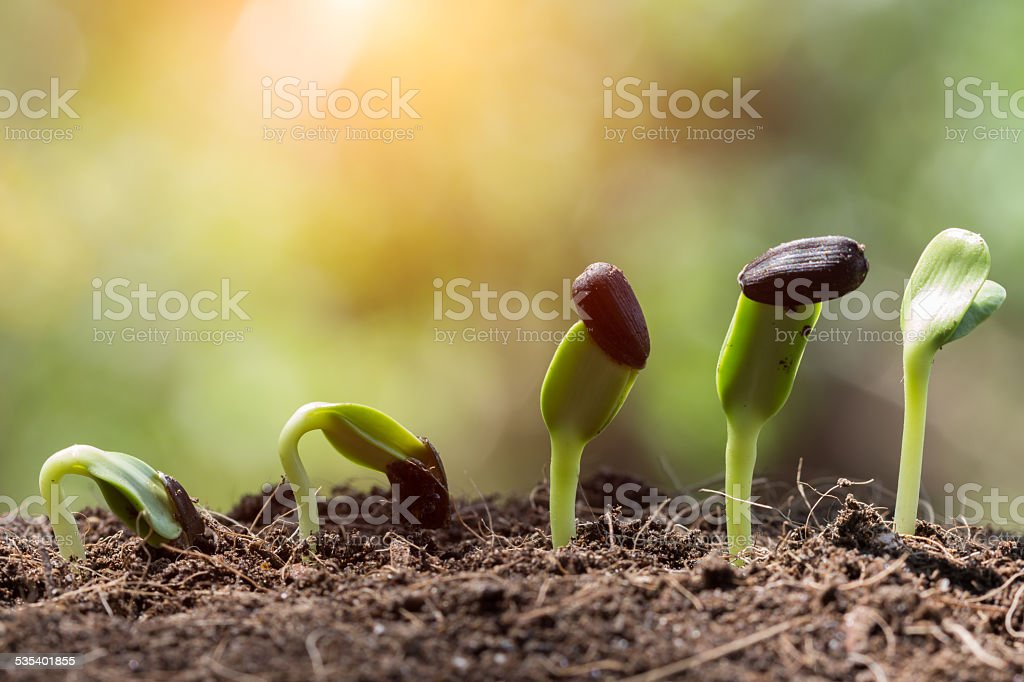 seed root on soil with sunbeam begining stock photo