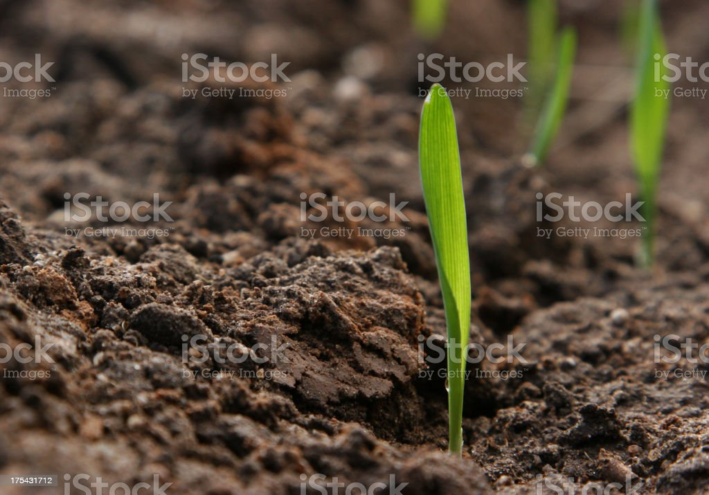 Seed sprouting from fresh earth stock photo