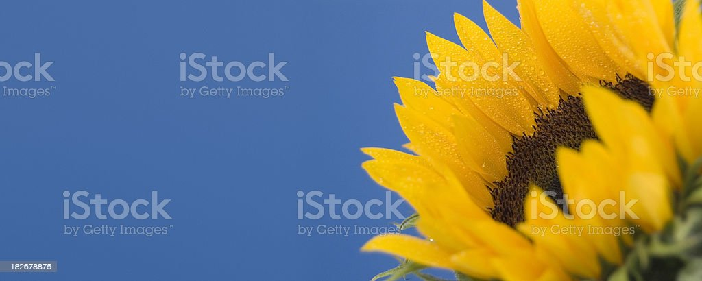 Seed to Sun stock photo