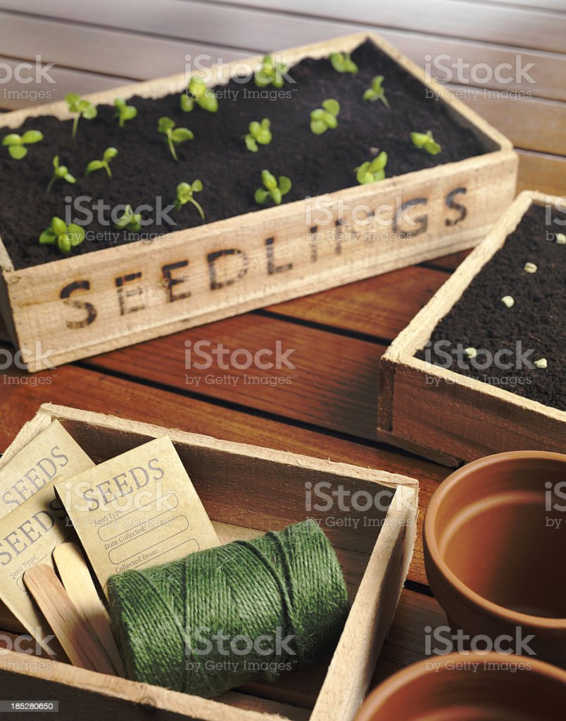 Seed tray and string stock photo