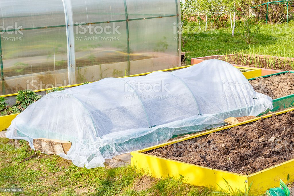 Seedbed on the Household plot. stock photo
