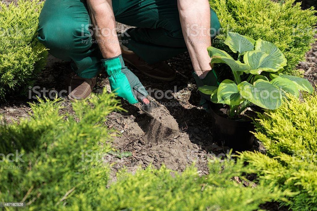 Seeding plants in the garden stock photo