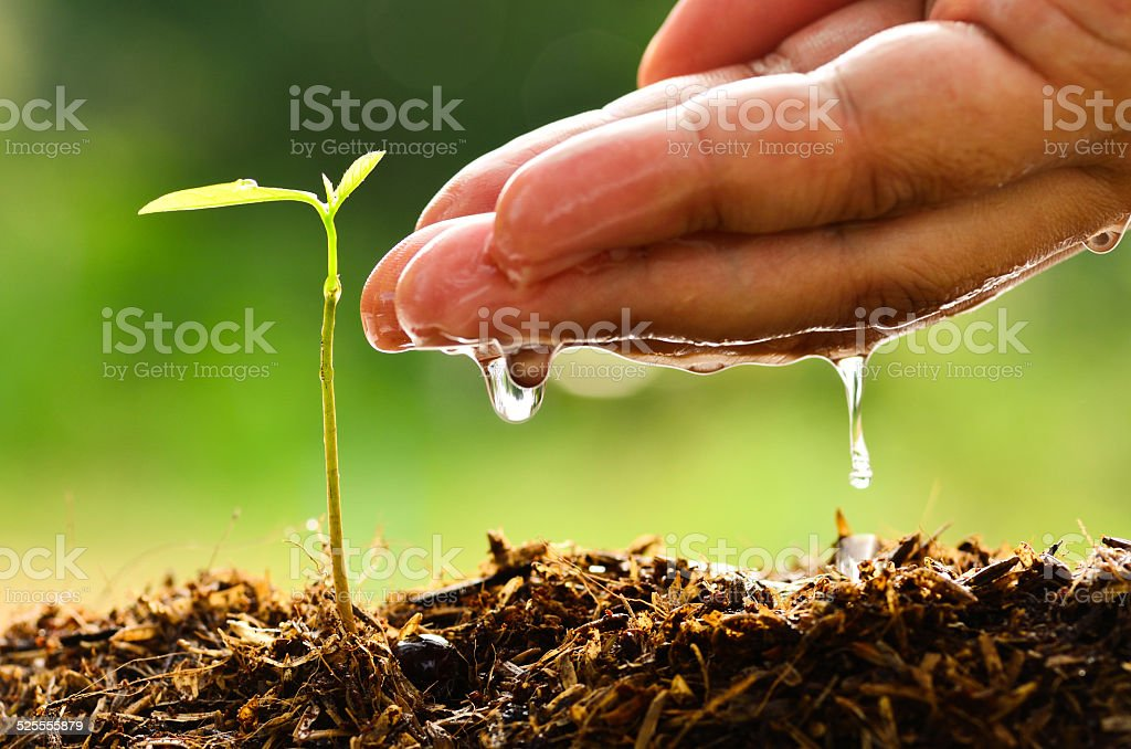 Seeding, seedling, male hand watering young tree stock photo