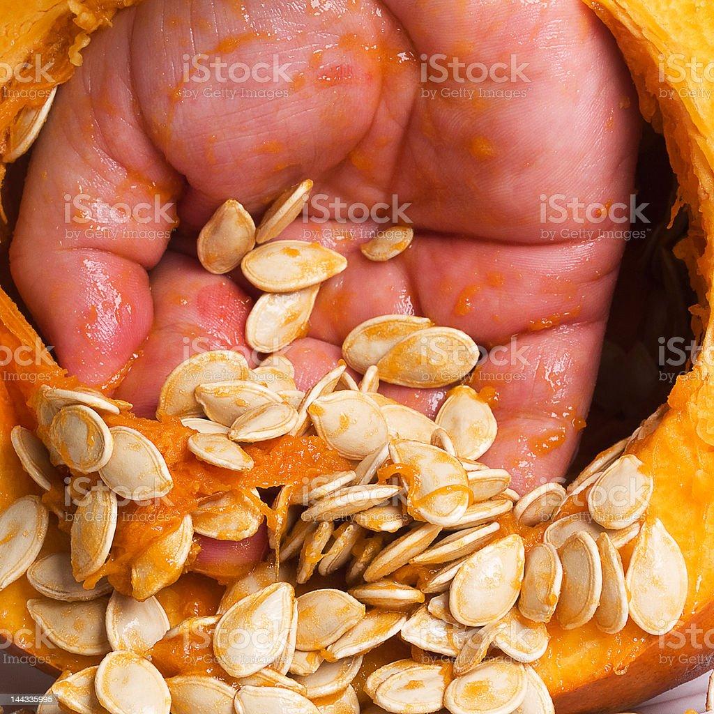 Seeding the Pumpkin stock photo