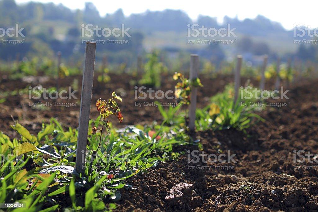 Seeding Time - XLarge stock photo