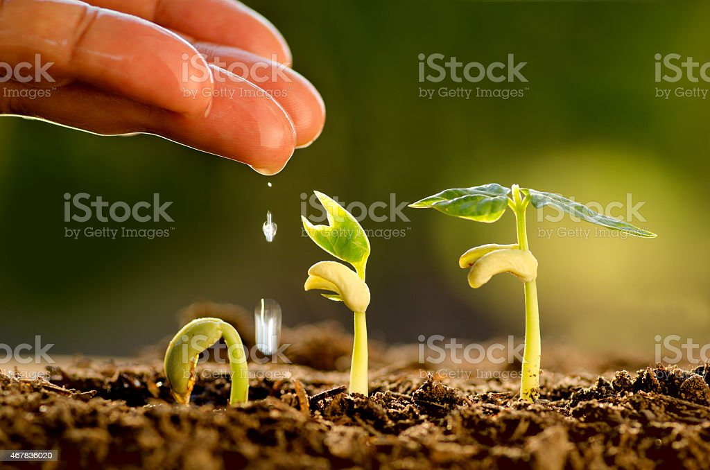 Seeding,Seedling,Male hand watering young tree stock photo