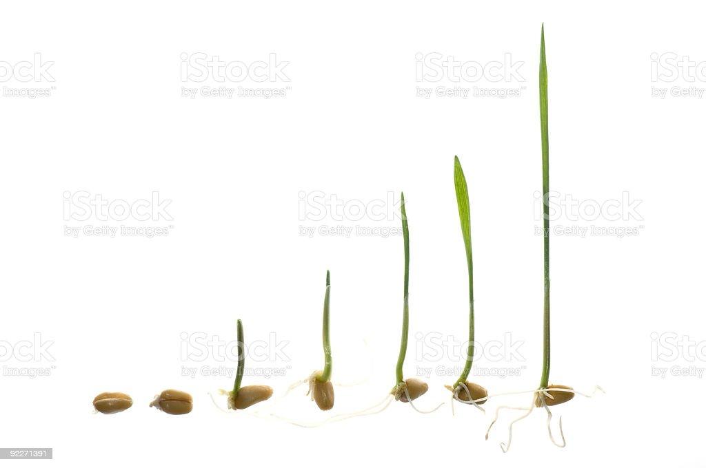 Seedling development stock photo