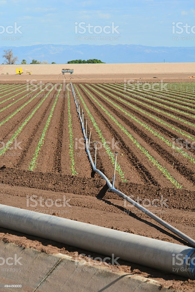Seedling Field stock photo